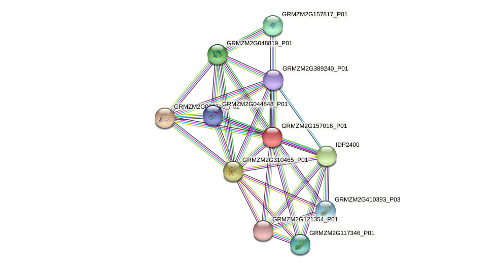 GRMZM2G157016_P01 protein (Zea mays) - STRING interaction network