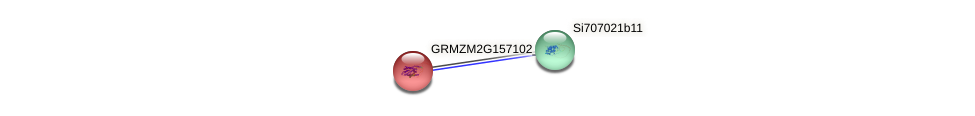 GRMZM2G157102_P01 protein (Zea mays) - STRING interaction network