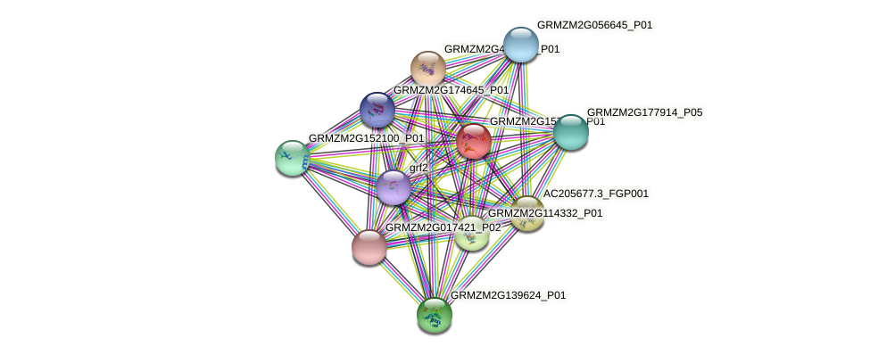 GRMZM2G157126_P01 protein (Zea mays) - STRING interaction network