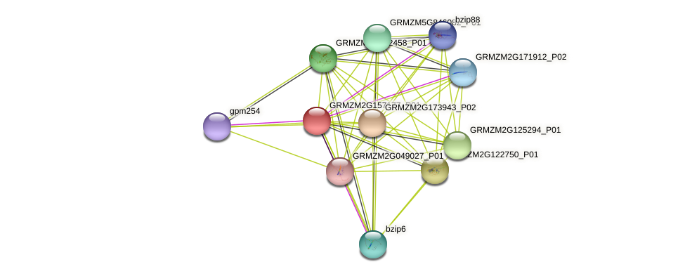 bzip115 protein (Zea mays) - STRING interaction network