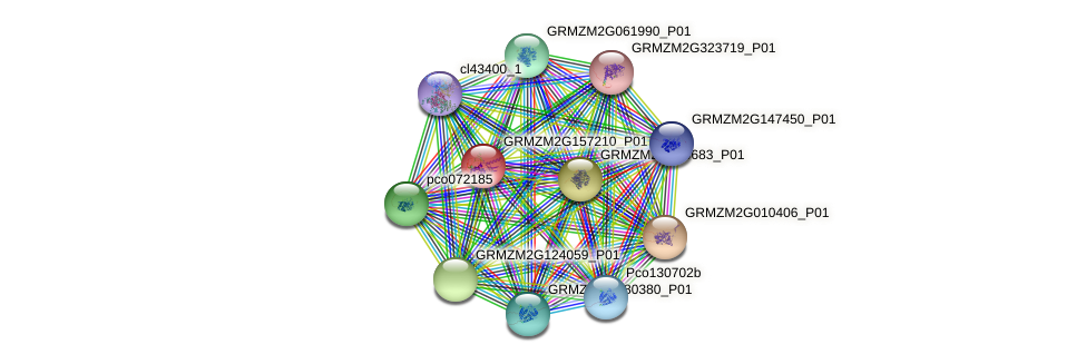 GRMZM2G157210_P01 protein (Zea mays) - STRING interaction network