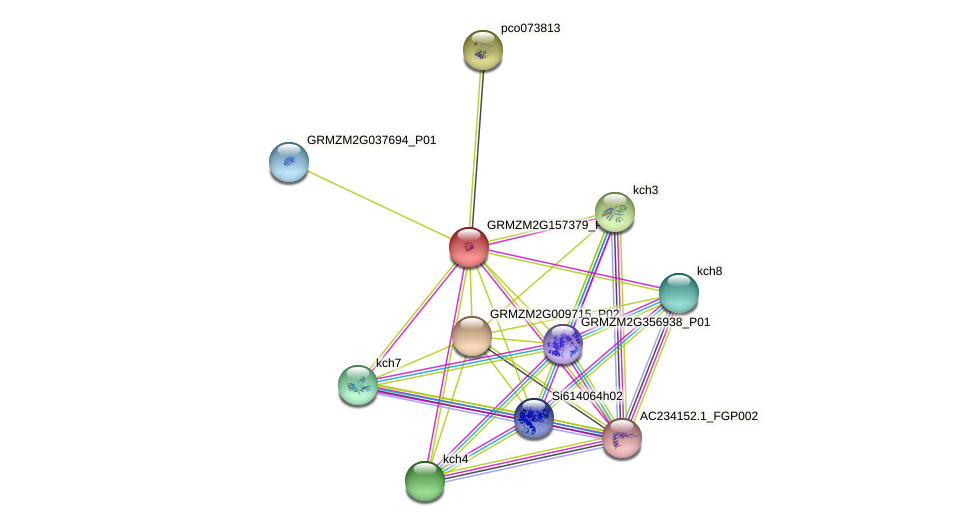 GRMZM2G157379_P01 protein (Zea mays) - STRING interaction network