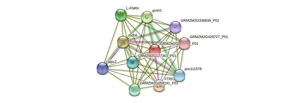 GRMZM2G157458_P01 protein (Zea mays) - STRING interaction network
