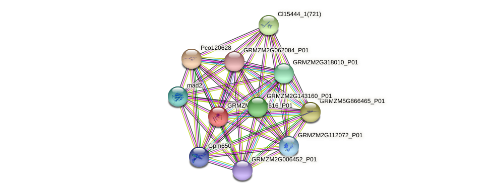 GRMZM2G157616_P01 protein (Zea mays) - STRING interaction network
