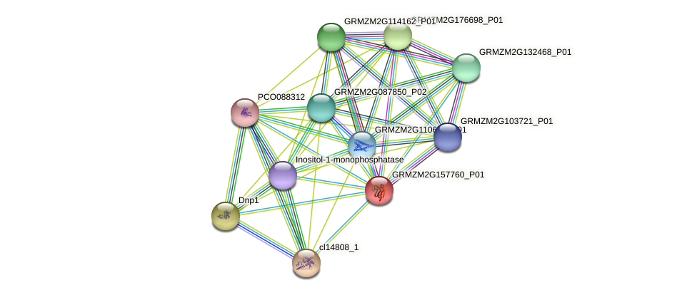 GRMZM2G157760_P01 protein (Zea mays) - STRING interaction network
