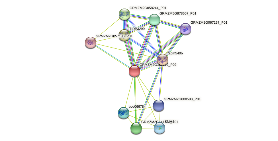 GRMZM2G157772_P02 protein (Zea mays) - STRING interaction network