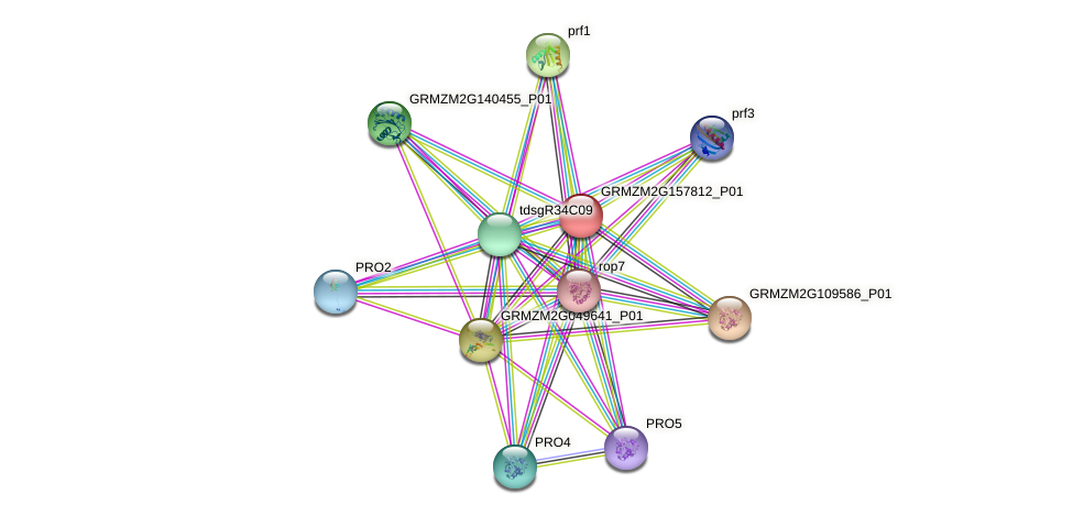 GRMZM2G157812_P01 protein (Zea mays) - STRING interaction network