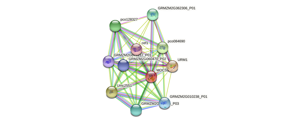UBA4-2 protein (Zea mays) - STRING interaction network
