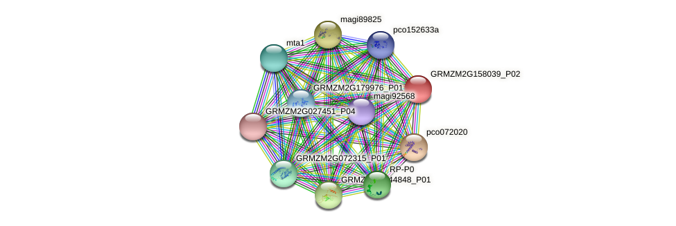 GRMZM2G158039_P02 protein (Zea mays) - STRING interaction network