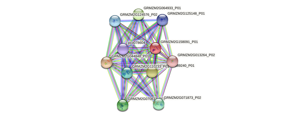 GRMZM2G158091_P01 protein (Zea mays) - STRING interaction network