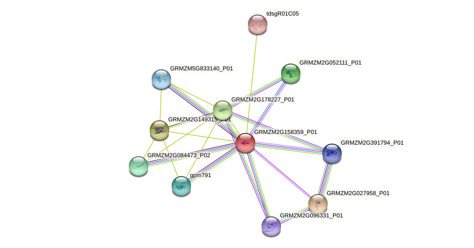 Zm.67013 protein (Zea mays) - STRING interaction network