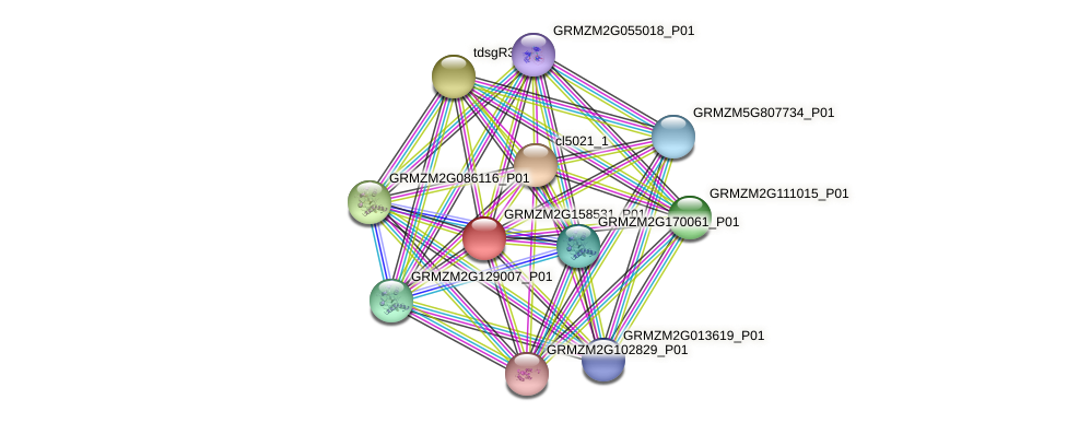 GRMZM2G158531_P01 protein (Zea mays) - STRING interaction network