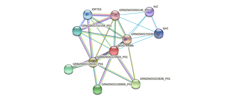 pco074498b protein (Zea mays) - STRING interaction network