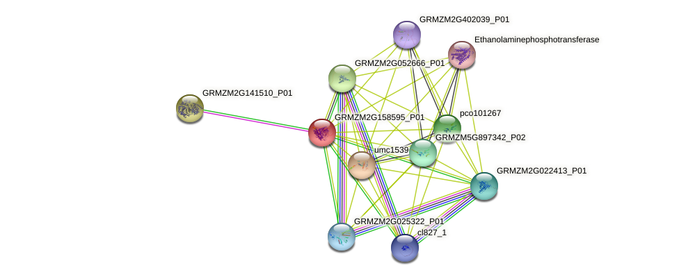 GRMZM2G158595_P01 protein (Zea mays) - STRING interaction network