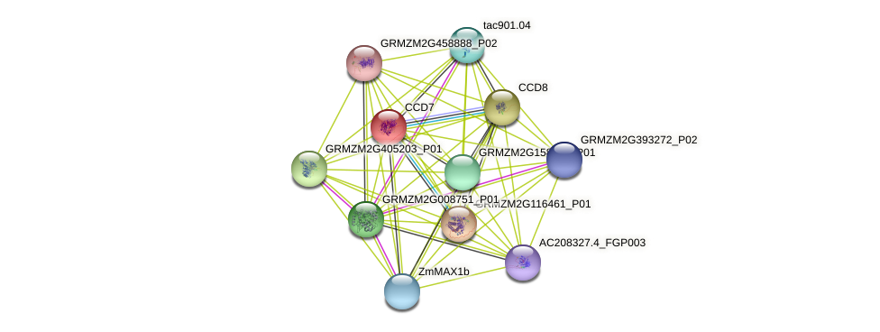 CCD7 protein (Zea mays) - STRING interaction network