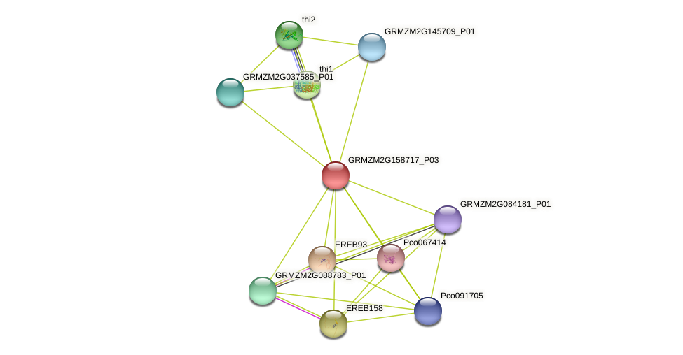 542193 protein (Zea mays) - STRING interaction network