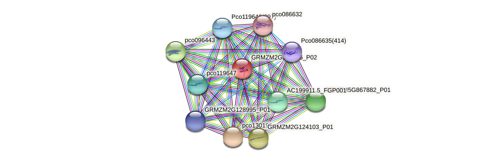 GRMZM2G158766_P01 protein (Zea mays) - STRING interaction network