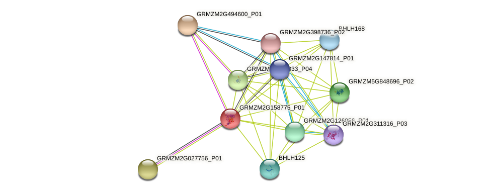 GRMZM2G158775_P01 protein (Zea mays) - STRING interaction network