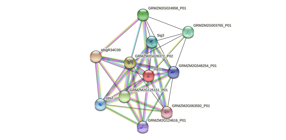 GRMZM2G158835_P01 protein (Zea mays) - STRING interaction network