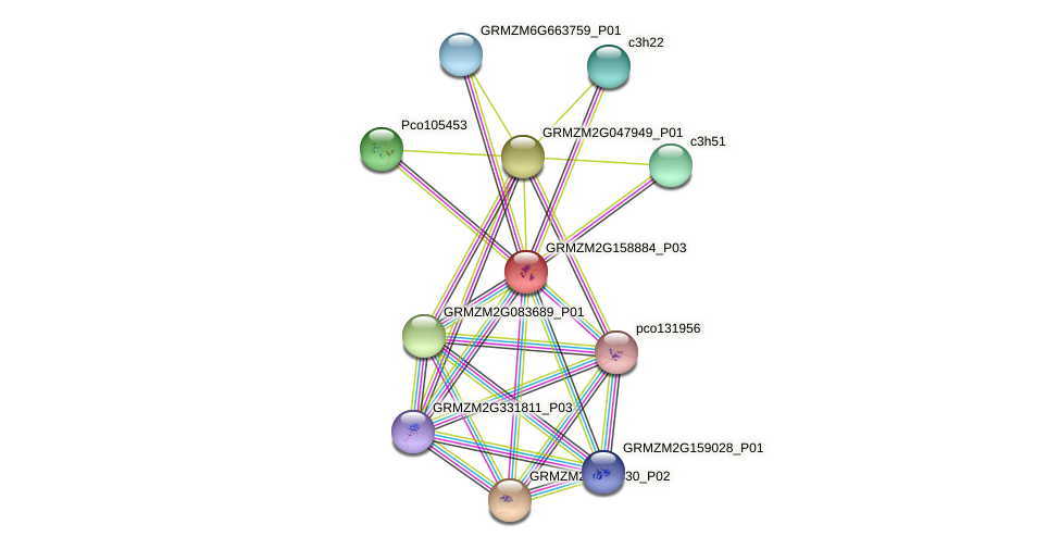 GRMZM2G158884_P03 protein (Zea mays) - STRING interaction network