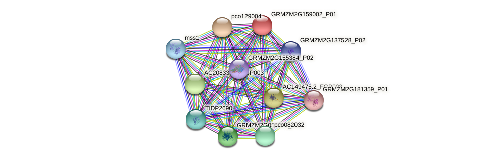 GRMZM2G159002_P01 protein (Zea mays) - STRING interaction network
