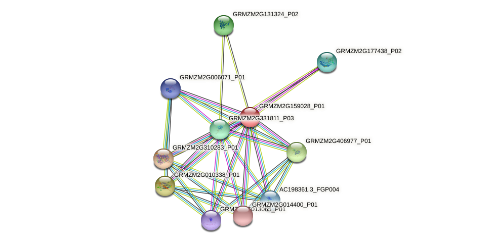 Zm.78907 protein (Zea mays) - STRING interaction network