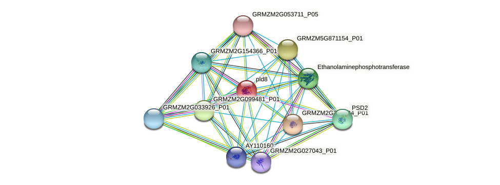 GRMZM2G159125_P01 protein (Zea mays) - STRING interaction network