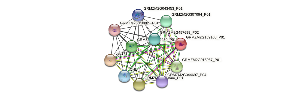 GRMZM2G159160_P01 protein (Zea mays) - STRING interaction network