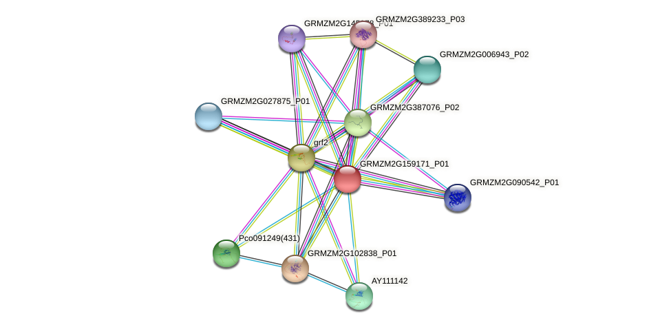 GRMZM2G159171_P01 protein (Zea mays) - STRING interaction network