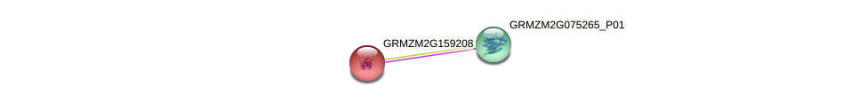 GRMZM2G159208_P01 protein (Zea mays) - STRING interaction network