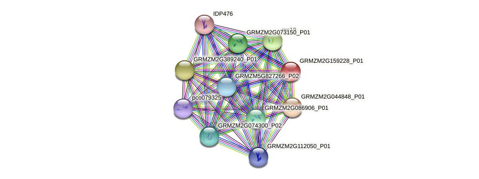 GRMZM2G159228_P01 protein (Zea mays) - STRING interaction network