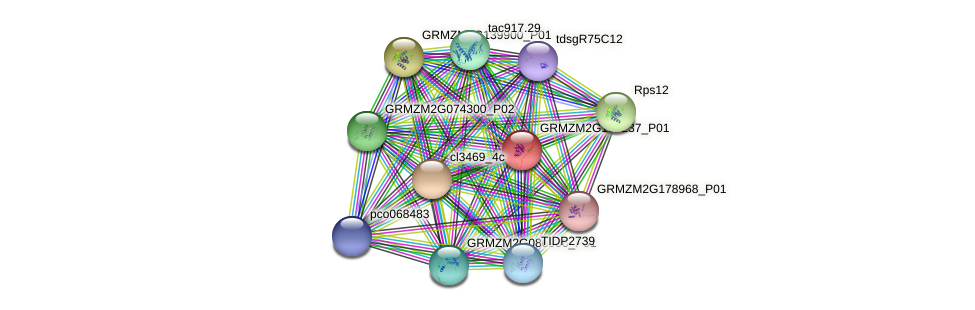 GRMZM2G159237_P01 protein (Zea mays) - STRING interaction network