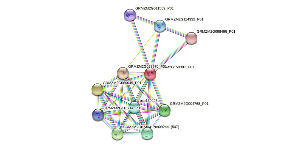 Zm.2001 protein (Zea mays) - STRING interaction network