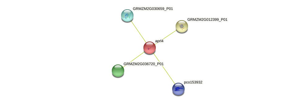 aprl4 protein (Zea mays) - STRING interaction network