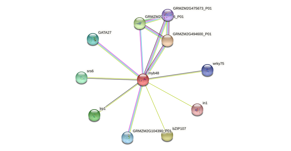 myb48 protein (Zea mays) - STRING interaction network