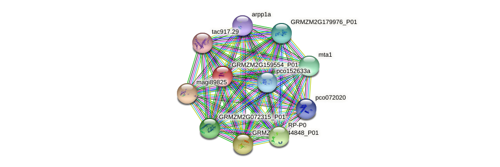 GRMZM2G159554_P01 protein (Zea mays) - STRING interaction network