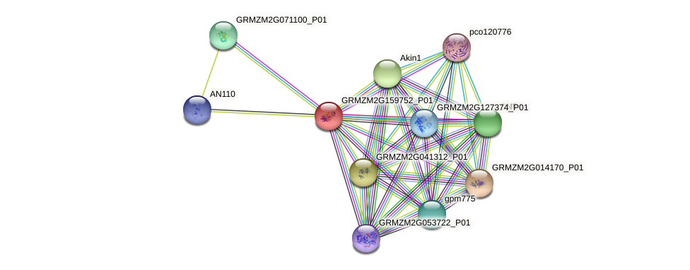 GRMZM2G159752_P01 protein (Zea mays) - STRING interaction network