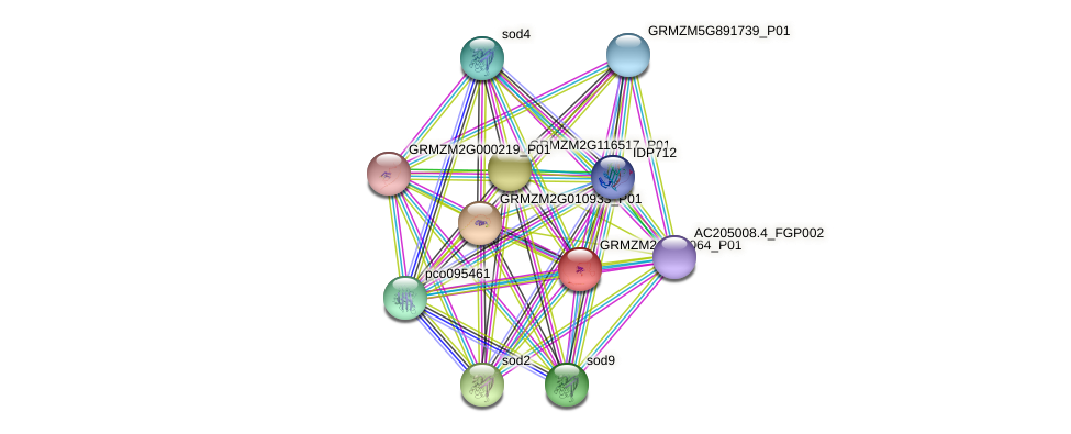 GRMZM2G160064_P01 protein (Zea mays) - STRING interaction network