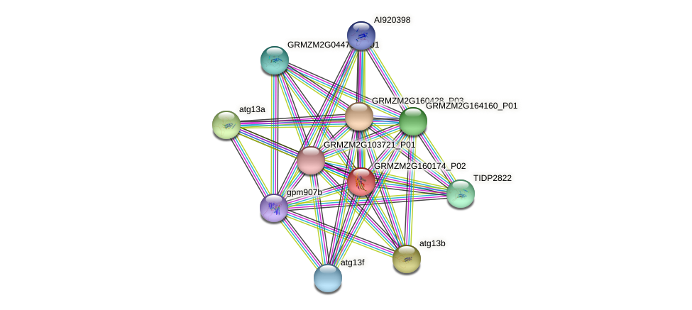 pco090029 protein (Zea mays) - STRING interaction network