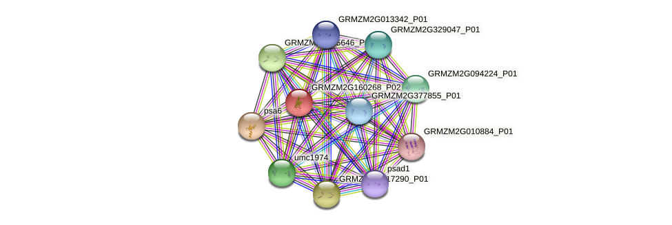 GRMZM2G160268_P02 protein (Zea mays) - STRING interaction network