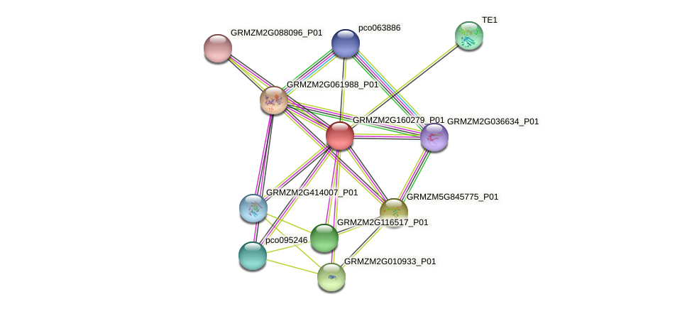 Zm.31377 protein (Zea mays) - STRING interaction network