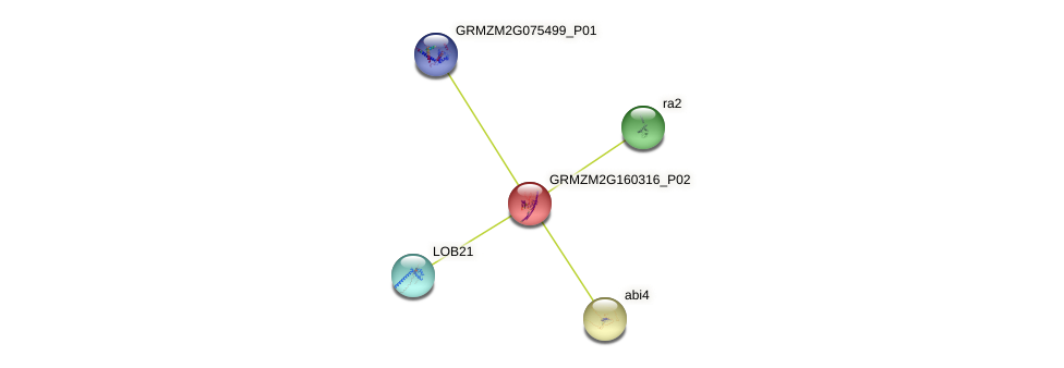 Zm.93912 protein (Zea mays) - STRING interaction network