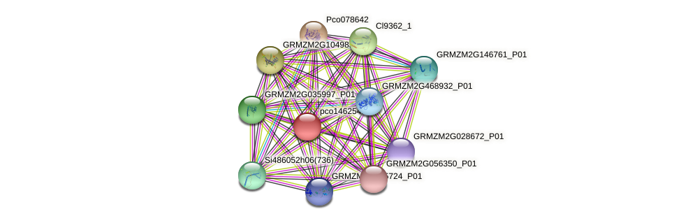 pco146254a protein (Zea mays) - STRING interaction network