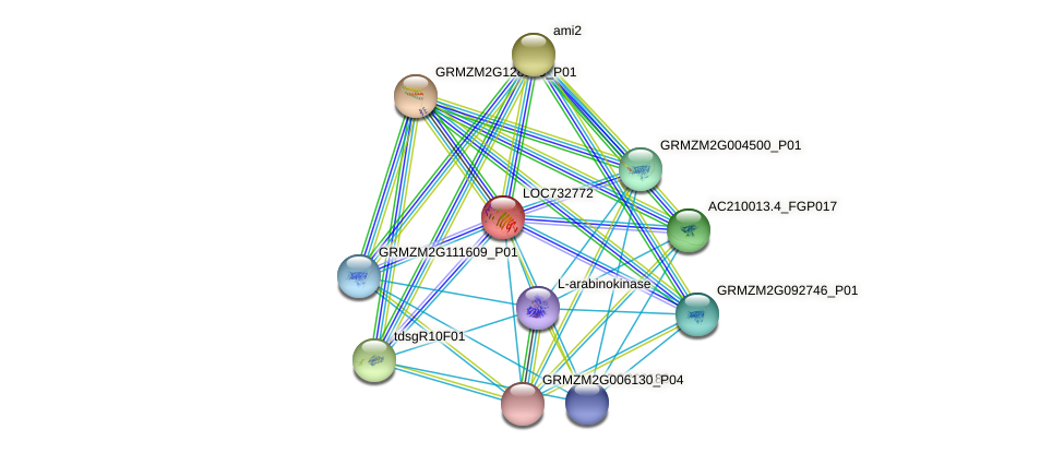 PG2C protein (Zea mays) - STRING interaction network