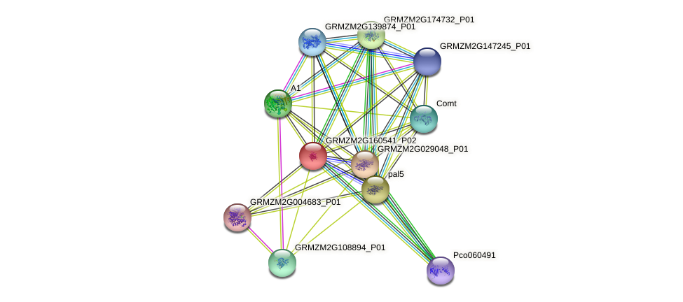 PAL1 protein (Zea mays) - STRING interaction network