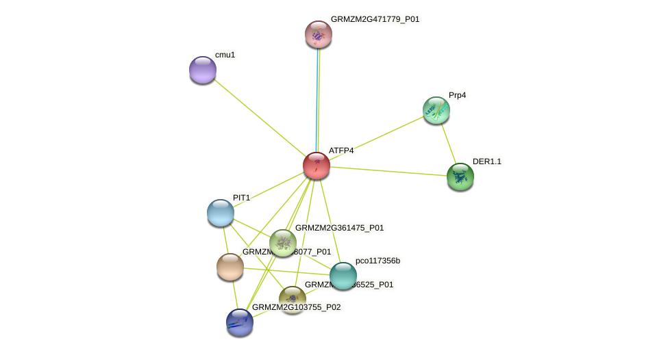 Zm.3568 protein (Zea mays) - STRING interaction network
