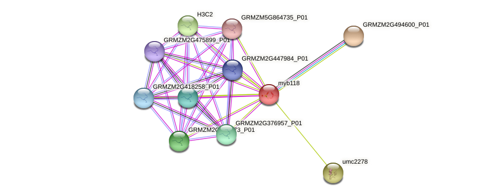 Zm.86184 protein (Zea mays) - STRING interaction network