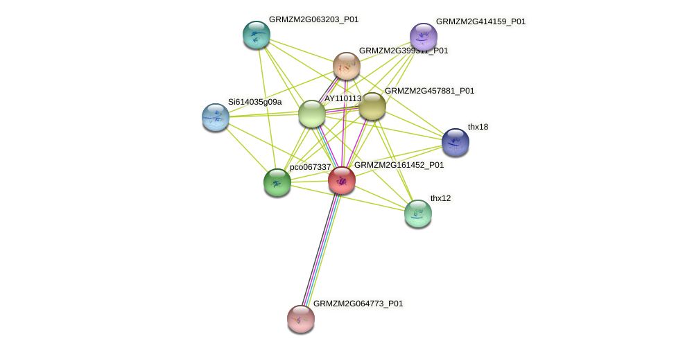 GRMZM2G161452_P01 protein (Zea mays) - STRING interaction network