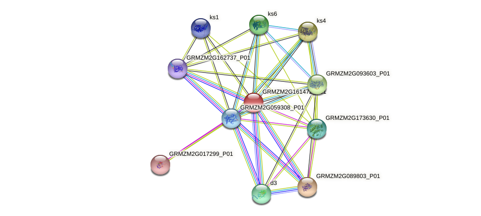 Zm.143305 protein (Zea mays) - STRING interaction network