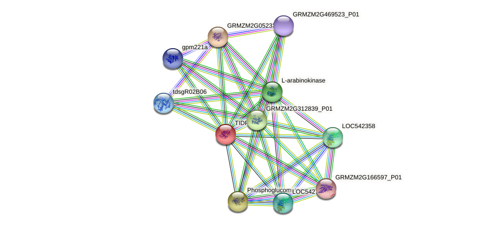 TIDP2982 protein (Zea mays) - STRING interaction network